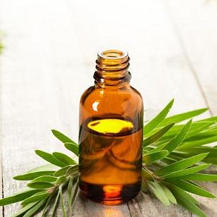 aceite esencial de árbol de té puro