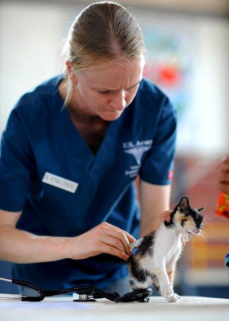 veterinario gatos